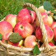 Stock Photo: Apples in autumn
