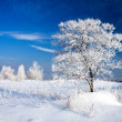 Tree in the frost — Stock Photo #19097957