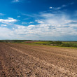 Field for crops — Stockfoto