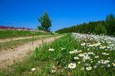 Paisaje de verano con el camino rural — Foto de Stock