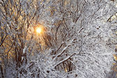 Winter forest and sun — Fotografia Stock