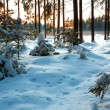 Winter landscape — Stock fotografie