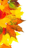 Background from autumn multi colored leaves — Stock Photo