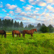 Horses on a pasture — Stock Photo #32413561