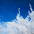 Abstract winter background — Stock Photo