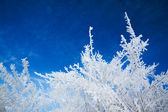 Abstract winter background — Stockfoto