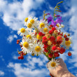 Bouquet from berries of wild strawberry — Stock Photo