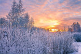 Winter landscape with sunset — Stock Photo