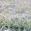 Green grass in hoarfrost — Stock Photo #33923151