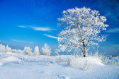 Winter landscape with a lonely tree — Stock Photo