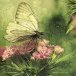 The butterfly sits on flowers — Stock Photo