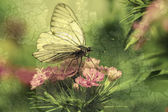 A borboleta senta-se em flores — Foto Stock