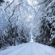 Winter landscape with the forest and the road — Stock Photo