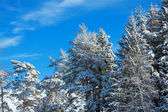 Winter landscape with the forest — Photo
