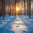 Winter landscape with the forest and sunset — Stock Photo