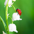 Stock Photo: Ladybug sits on a flower