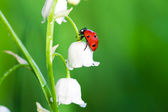Ladybug sits on a flower — Stock Photo