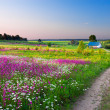 Landscape with a blossoming meadow, the road and a farm — Stock Photo