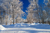 Winter landscape with the road the forest — Foto Stock