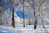 冬季景观与森林 — 图库照片