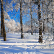 Winter landscape with the forest — Stock Photo