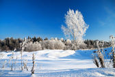 Winter rural landscape with the blue sky and the wood — Foto de Stock