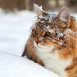 Cat on sits on snow — Foto Stock