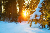 Winter landscape with the forest and sunset — Stock fotografie