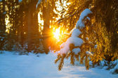 Winter landscape with the forest and sunset — Foto de Stock