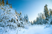 Winter landscape with the forest — Stockfoto