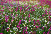 Background from flowers blossoming on a meadow — Stock Photo