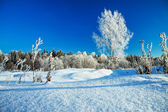 Winter rural landscape with the blue sky and the wood — Stock fotografie