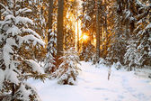 Winter landscape with sunset in the forest — ストック写真