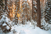 Winter landscape with sunset in the forest — Stock fotografie