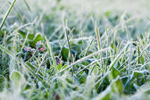 Green grass covered with hoarfrost — Stock Photo
