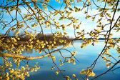 Lente landschap met een bloeiende boom en de rivier — Stockfoto