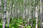 Paysage d'été avec la forêt et le soleil — Photo