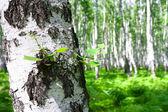夏日风景与森林和太阳 — 图库照片