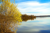 Spring landscape with a blossoming tree and the river — Stock Photo