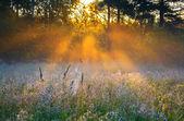 Nascer do sol sobre um prado de florescimento de verão — Fotografia Stock