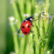 Ladybug on a green grass — Stock Photo #39128267