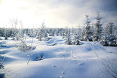 Winter landscape with the forest and the sun — Stok fotoğraf