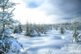 Winter landscape with the forest and the sun — Stock Photo
