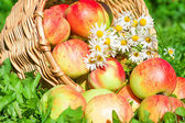Apples in a garden on a green grass — Stock Photo