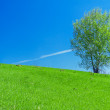 Spring landscape with a lonely tree in the field — Stock Photo #41395037