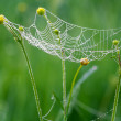 Web with drops of dew and a spider — Stock Photo #41985911