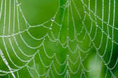 Background from a web with dew drops — Stock Photo