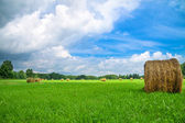 Summer rural landscape with a field and hay — Stok fotoğraf