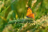Butterfly sits on green grass — Stock Photo