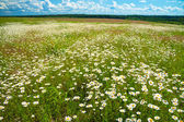 Summer rural landscape with a blossoming meadow and the blue sky — Foto de Stock
